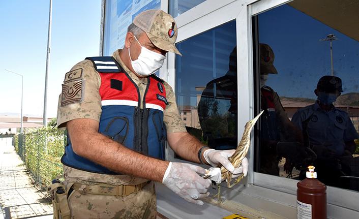 Kahramanmaraş'ta ender görülen Hint Gölet Balıkçıl kuşu bulundu