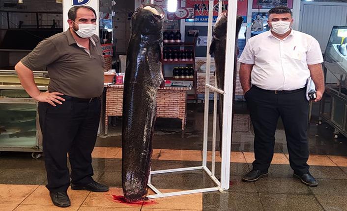 2 metrelik balık yakalandı