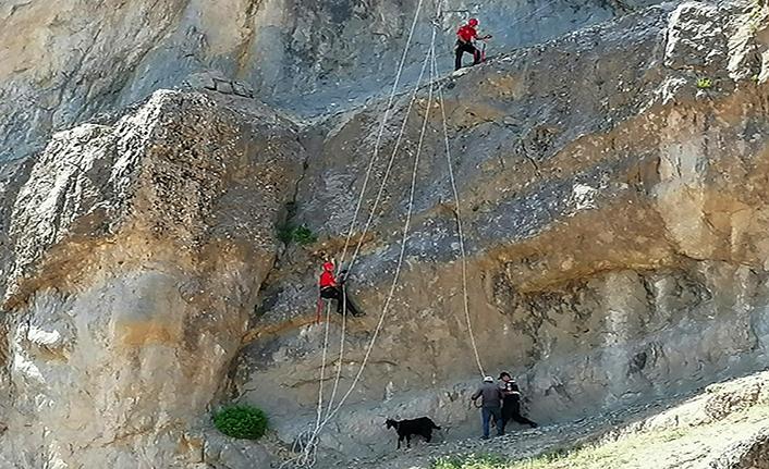 Kayalıklarda mahsur kalan hayvanlar kurtarıldı