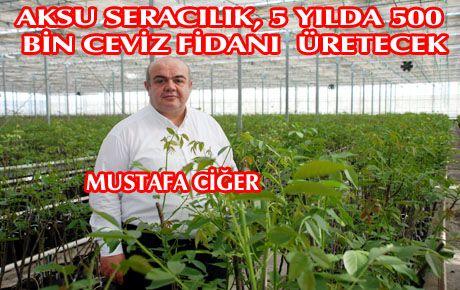 AKSU TARIMDAN, TESCİLLİ CEVİZE 2,5 MİLYON TL'LİK YATIRIM