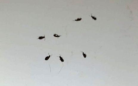 Büyükşehir'den böcek açıklaması