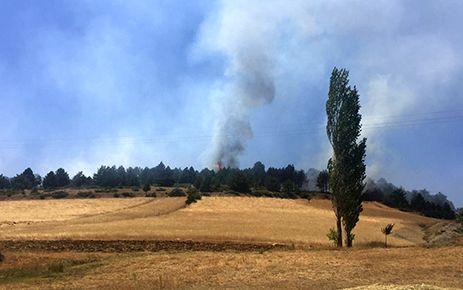Kahramanmaraş'ın Ekinözü İlçesinde orman yangını