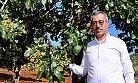Gaziantep baklavasının fıstığı Pazarcık'tan