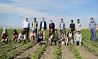 Çiftçiye biber fidesi desteği