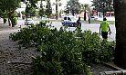 Kahramanmaraş'ta ağaç devrildi