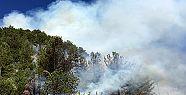 Kahramanmaraş'ta 5 ayrı orman yangını
