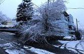 Kar yağışı ağaç devirdi