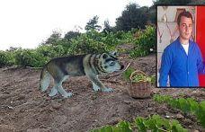 Yaban hayvanlarına karşı kurt maketi