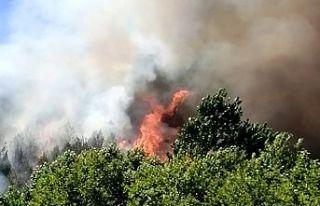 Kahramanmaraş'taorman yangını