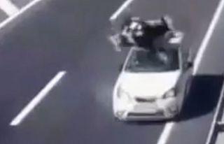 Otomobil ineğe böyle çarptı