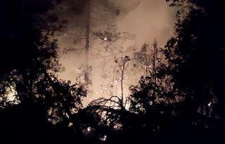 Yangınlarda 65 hektar zarar gördü