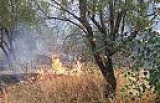Kahramanmaraş Yedikuyular'da orman yangını