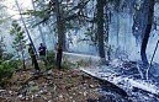 Kahramanmaraş'ta 2 ayrı orman yangını