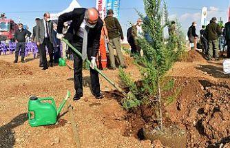 Dulkadiroğlu Belediyesi 223 bin 277 fidan dikecek